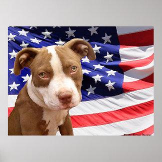 Perrito de Pitbull del americano Posters