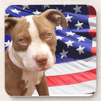 Perrito de Pitbull del americano Posavaso