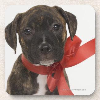 Perrito de Pitbull que lleva la cinta roja Posavasos De Bebida