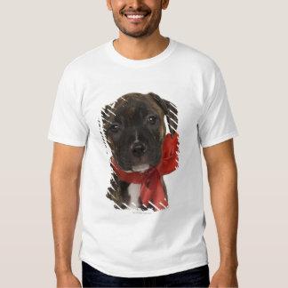 Perrito de Pitbull que lleva la cinta roja Remera
