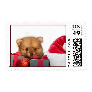 Perrito de Pomeranian del navidad