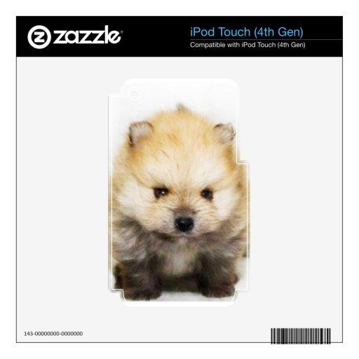 Perrito de Pomeranian iPod Touch 4G Calcomanías