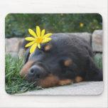 Perrito de Rottweiler Alfombrilla De Raton