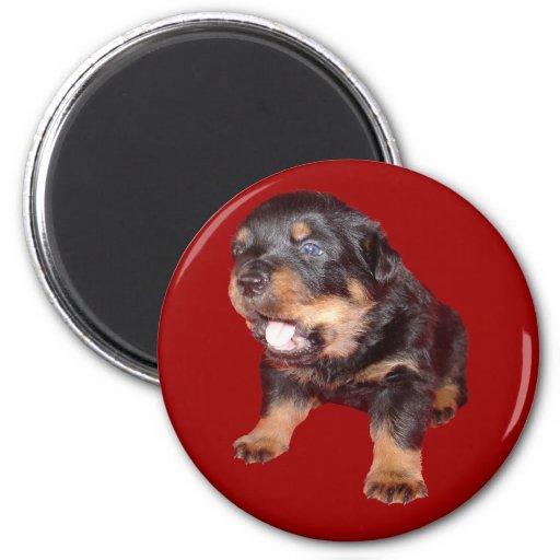 Perrito de Rottweiler en deber de guardia Imanes De Nevera