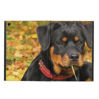 Perrito de Rottweiler que miente en la tierra en b