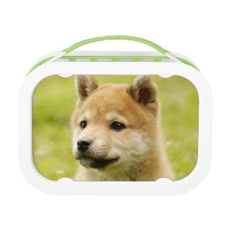 perrito de Shiba-ken