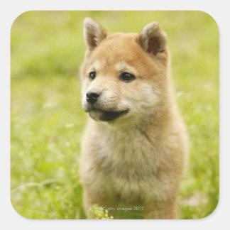 perrito de Shiba-ken Colcomanias Cuadradas