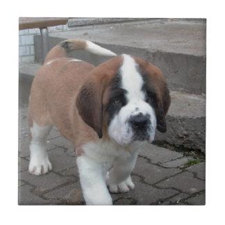 perrito de St Bernard Azulejo Cuadrado Pequeño