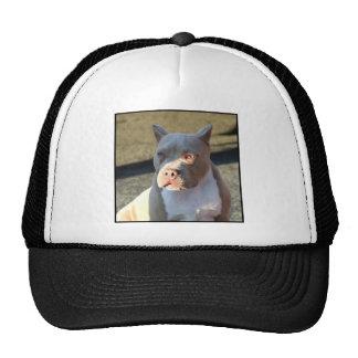 Perrito de Staffordshire Terrier americano Gorra