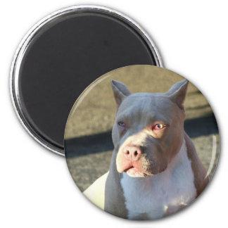 Perrito de Staffordshire Terrier americano Iman De Frigorífico