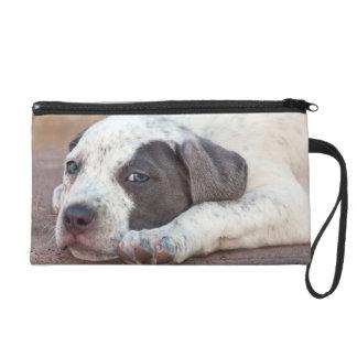 Perrito de Staffordshire Terrier americano que se