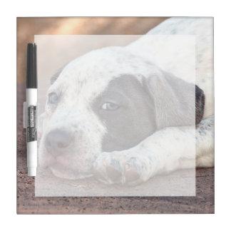 Perrito de Staffordshire Terrier americano que se Pizarras Blancas De Calidad