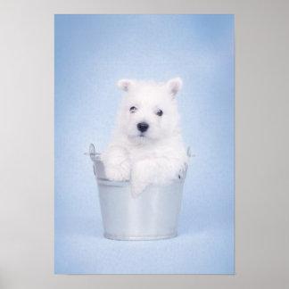Perrito de Terrier blanco de montaña del oeste Póster