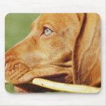 Perrito de Vizsla en parque con el palillo en boca Alfombrillas De Ratón