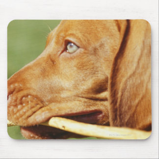 Perrito de Vizsla en parque con el palillo en boca Tapetes De Raton