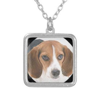 Perrito del beagle collares