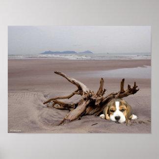 Perrito del beagle en el poster de la playa