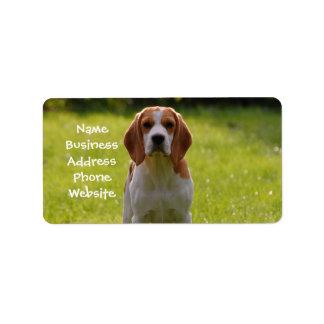 perrito del beagle en guardia etiquetas de dirección