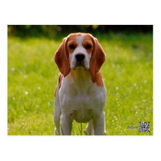 perrito del beagle en guardia postal