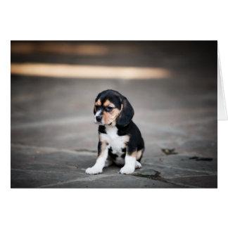 Perrito del beagle en la sombra tarjeta de felicitación