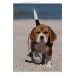 Perrito del beagle felicitación