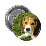 Perrito del beagle pin