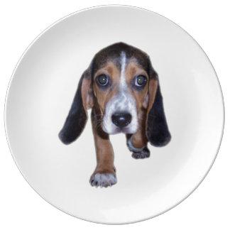 Perrito del beagle que camina - escoja su color de platos de cerámica