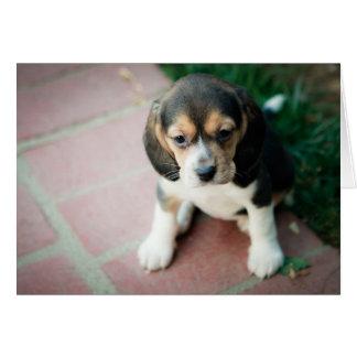 Perrito del beagle que se sienta tarjeta de felicitación
