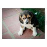 Perrito del beagle que se sienta tarjetón
