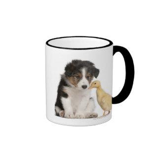 Perrito del border collie (6 semanas de viejo) que taza de café