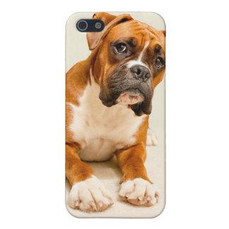 Perrito del boxeador en el contexto poner crema de iPhone 5 cárcasa