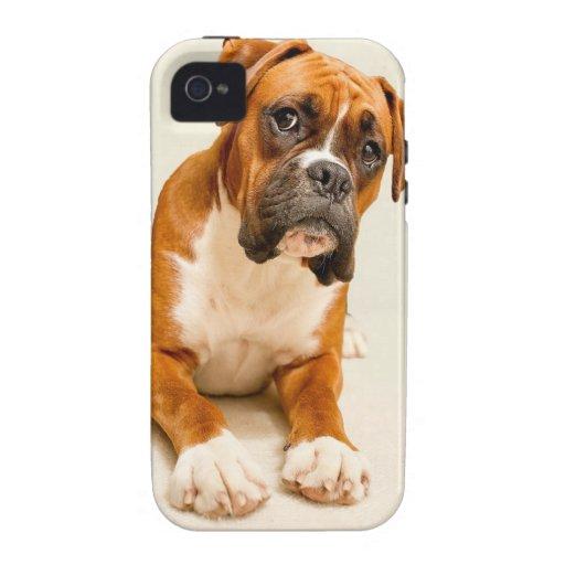Perrito del boxeador en el contexto poner crema de funda para iPhone 4
