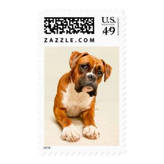 Perrito del boxeador en el contexto poner crema de sellos