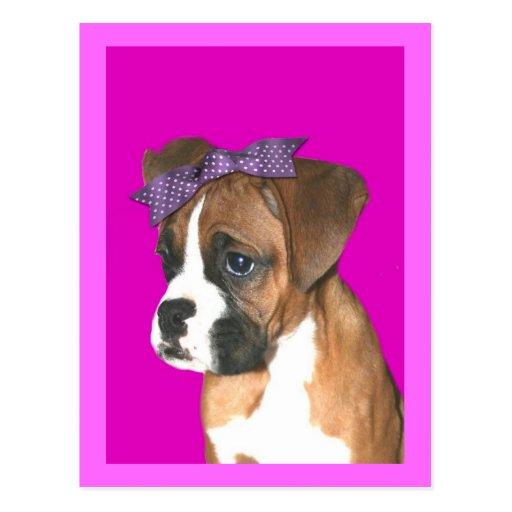 Perrito del boxeador en postal rosada