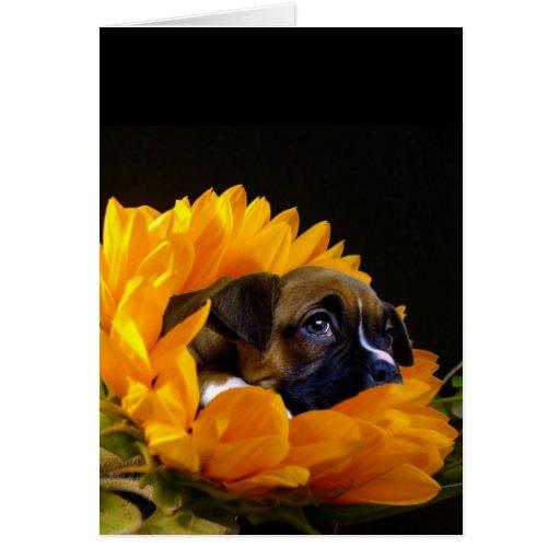 Perrito del boxeador en tarjeta de felicitación de