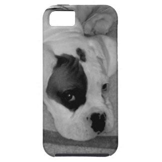 Perrito del boxeador iPhone 5 carcasa