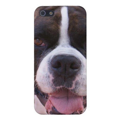 Perrito del boxeador iPhone 5 coberturas