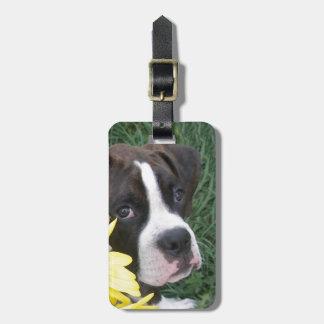 Perrito del boxeador que mira a escondidas alreded etiqueta para maleta