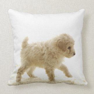 Perrito del caniche almohada
