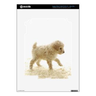 Perrito del caniche iPad 3 skins