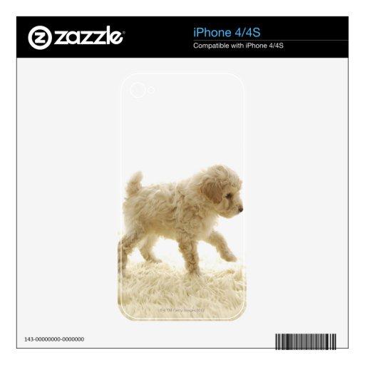 Perrito del caniche iPhone 4S calcomanía
