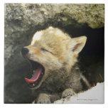 Perrito del coyote que bosteza azulejos ceramicos