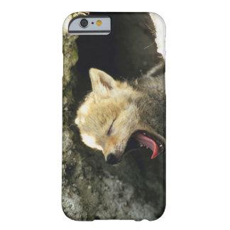 Perrito del coyote que bosteza funda de iPhone 6 barely there