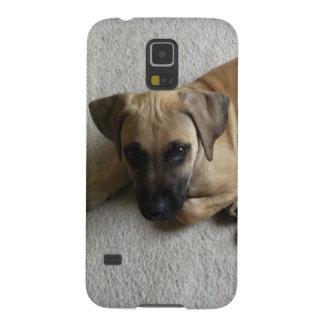 perrito del cur de la Negro-boca con el juguete az Carcasa De Galaxy S5