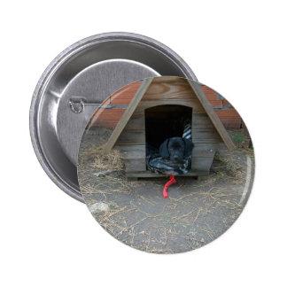 Perrito del Dachshund en caseta de perro Pin