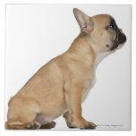 Perrito del dogo francés (3,5 meses) azulejo cuadrado grande