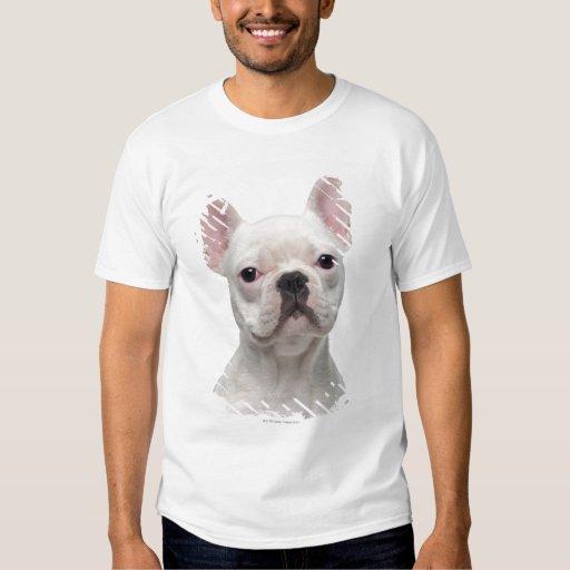 Perrito del dogo francés (5 meses) camisas