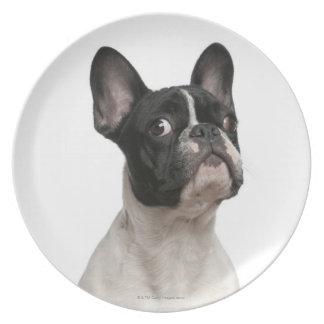 Perrito del dogo francés (5 meses) platos de comidas