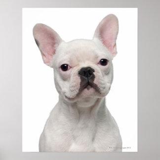 Perrito del dogo francés (5 meses) póster