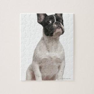 Perrito del dogo francés (5 meses) puzzles con fotos